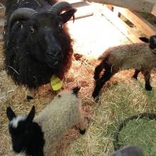Tiny Rohan with mama Nina Negra and sister Slippers!