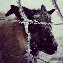 Beautiful frosty Rohan!
